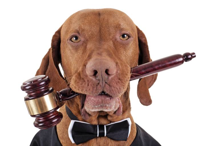 dog-judge